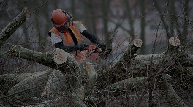 Wakefield Tree Service