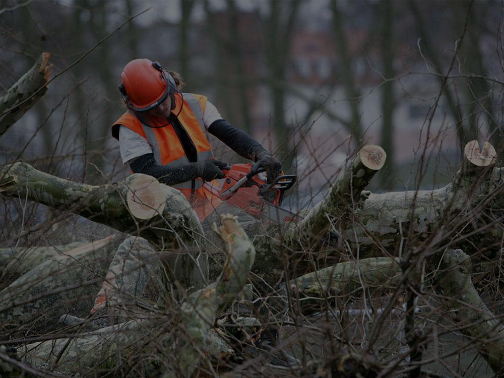 Lynnfield Tree Removal